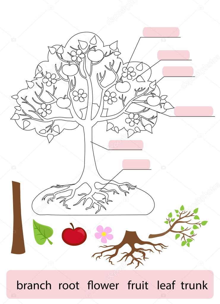 Part Of Art : Parts of tree work page for students vector illustration