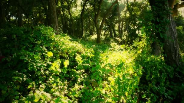 zelený Les odpoledne