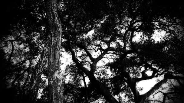 strašidelný Les v odpoledne