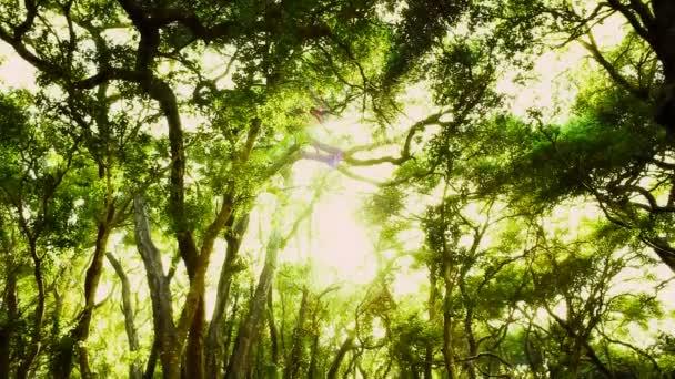 lesní stromy lemované odpoledne