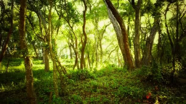 Rezervovaná zelený Les