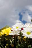 területén virágok tavasszal