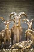 Skupina horských koz