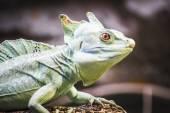 Lizard resting in the sun