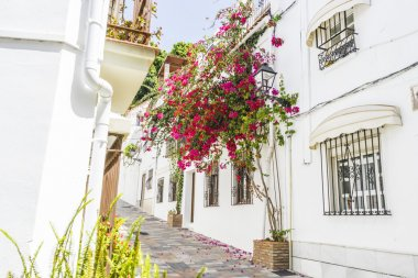 Narrow streets with floral balconies