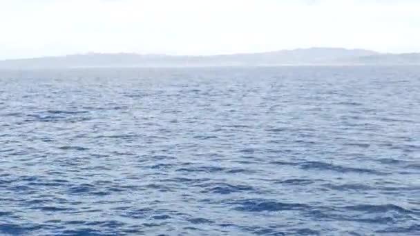 Pod delfínů na svobodě, Pacifický oceán modrá voda. Škola divokých zvířat na moři. California USA.