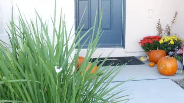 Pumpkin halloween decor in front of blue door in yard. Jack o lantern in doorway