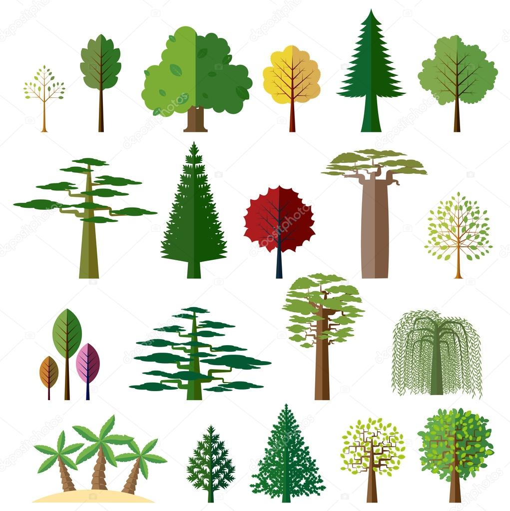 Trees from different regions of the world stock vector for Lista de arboles perennes