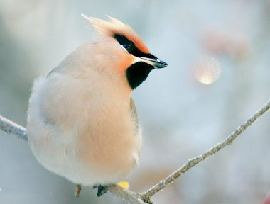 small bird sitting on tree branch
