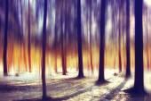 Fotografie jarní slunce Lesní krajina