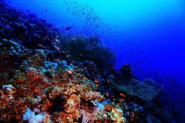 "Картина, постер, плакат, фотообои ""Коралловый риф в теплое море"", артикул 114205610"