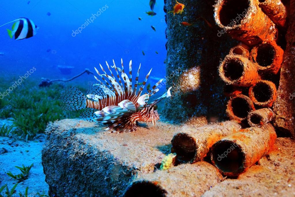 unusual saltwater fish