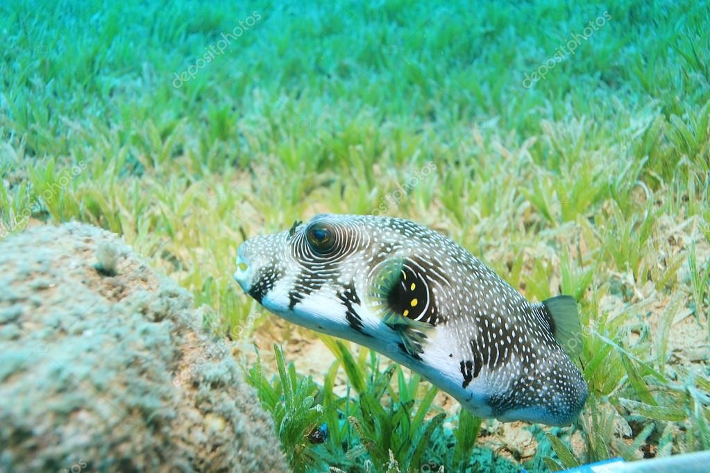 unusual saltwater fish
