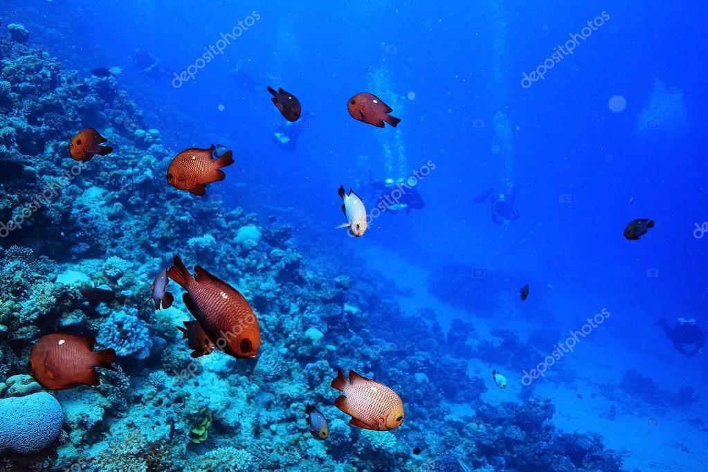 Tropical sea underwater