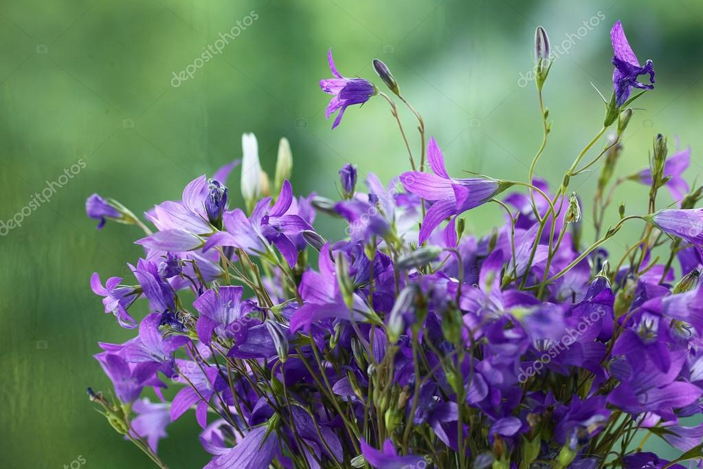 Purple bell flowers bouquet stock photo xload 55773909 purple bell flowers bouquet stock photo mightylinksfo
