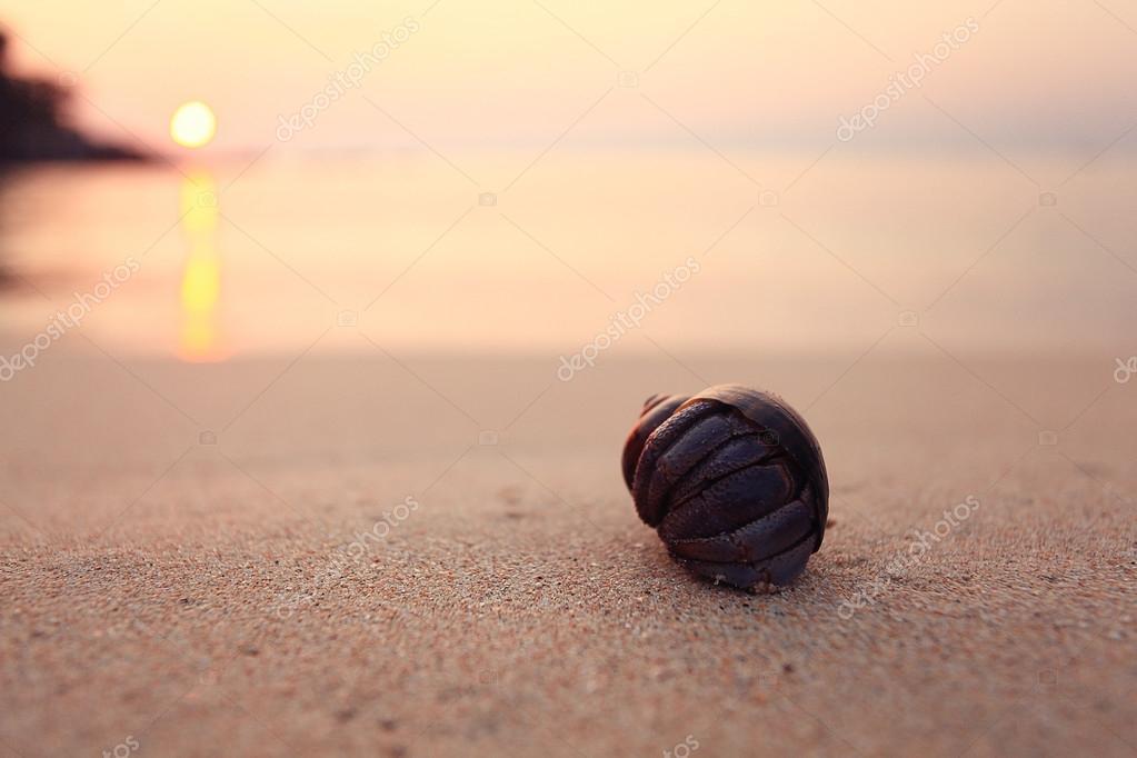 Sea beach at sunset