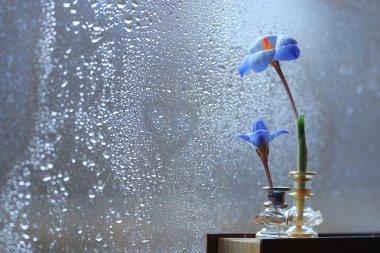 Blue crocus flowers on book