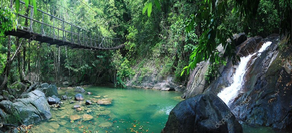 Rope bridge in jungle