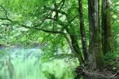 Lesní krajina s řekou