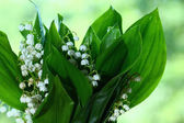 Fotografie lily of the valley flowers