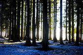 zimní Lesní krajina