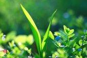 čerstvá tráva v lese