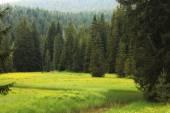 Lesní krajina v létě