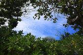 Zöld erdős táj