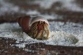 Photo Crab on sandy beach