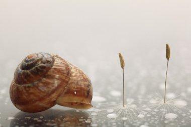 macro shot of snail and dandelion seeds