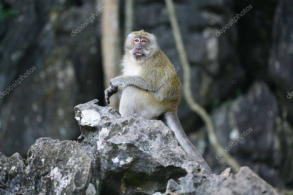 Monkey in wild forest
