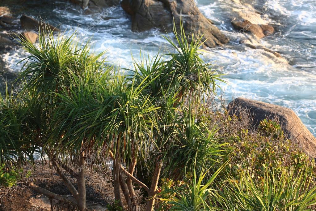 Фотообои Jungle on a beautiful island