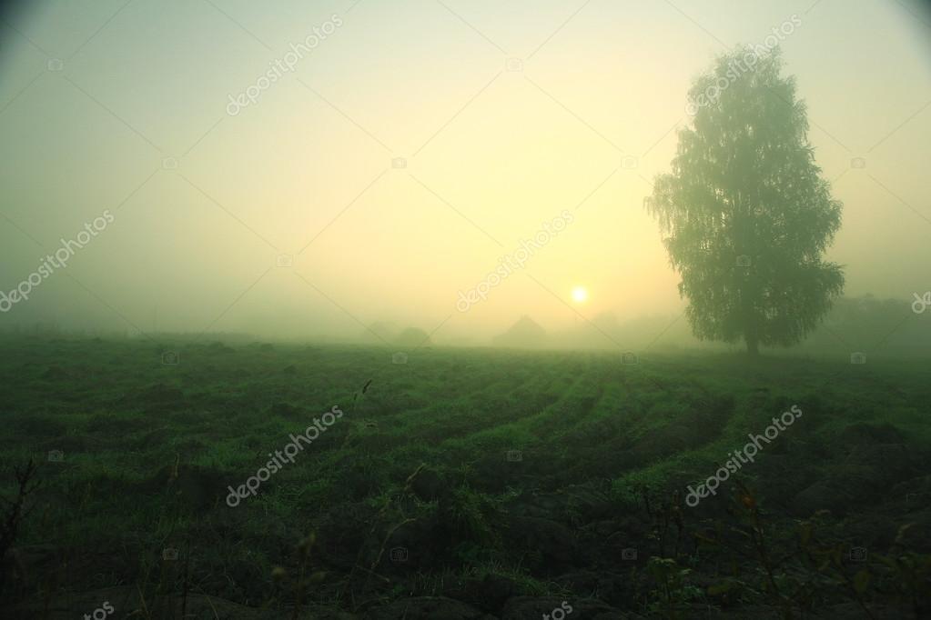 Summer fog in the village