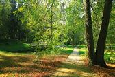 podzimní Lesní krajina