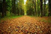 pozadí stromy v lese