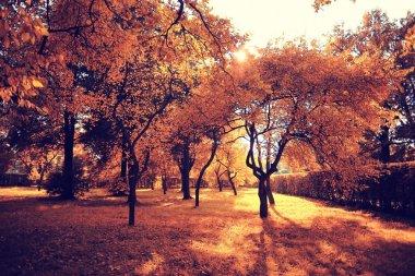 autumn park landscape with trees