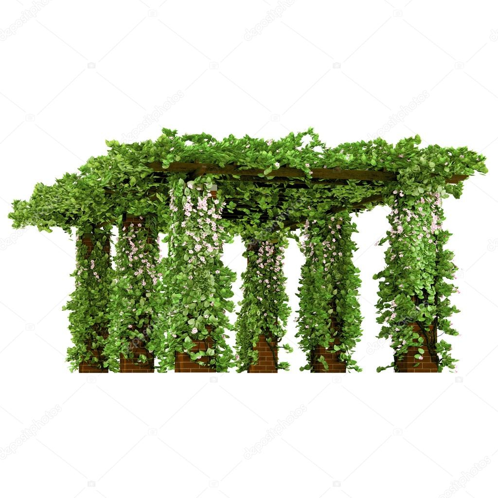 Outdoor arbor with ivy pergola