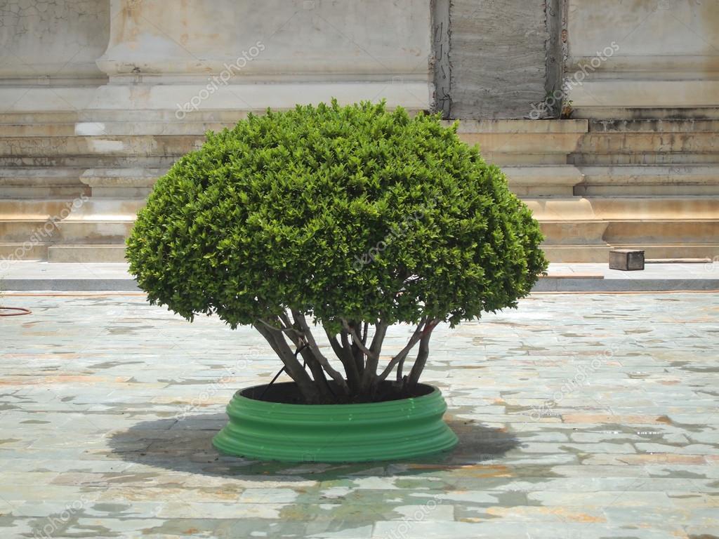 Topiario arbolito en el bote decora el parque foto de for Arbolitos para jardines pequenos