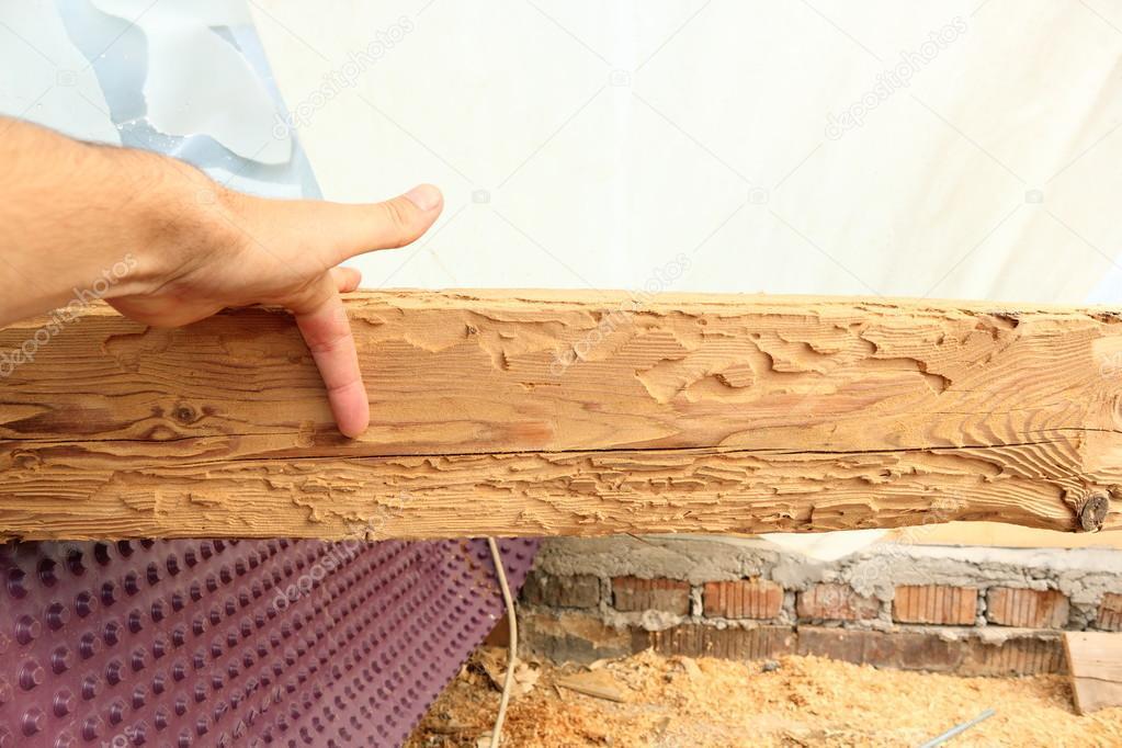 trave di legno mostrando allattacco di insetti — Foto Stock ...