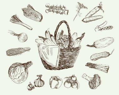 vegetables vector hand drawn