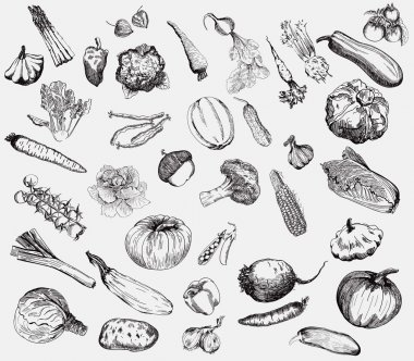 vegetables vector hand drawn