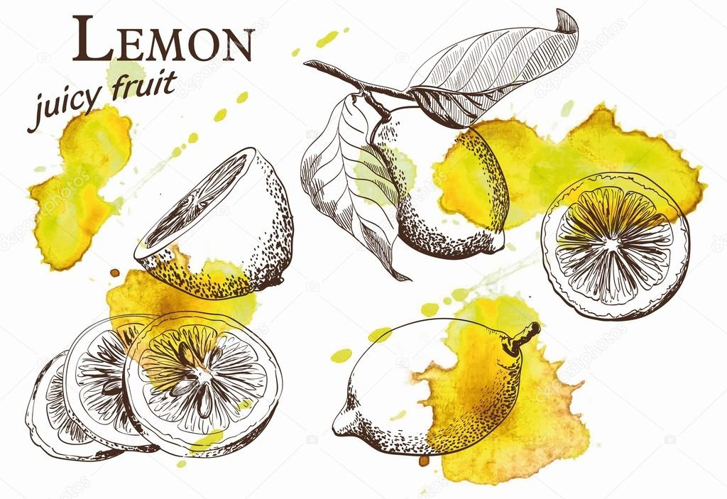 beautiful yellow lemon