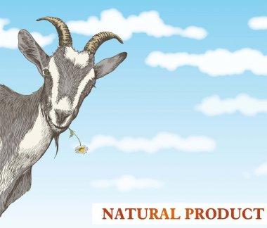 goats head on a blue sky background