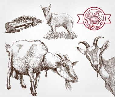goat breeding