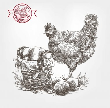 poultry breeding sketches