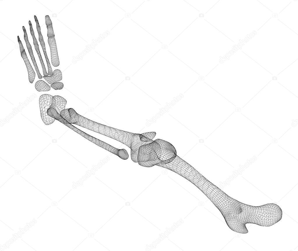 Menschliches Bein Skelett — Stockfoto © Podsolnukh #100324818