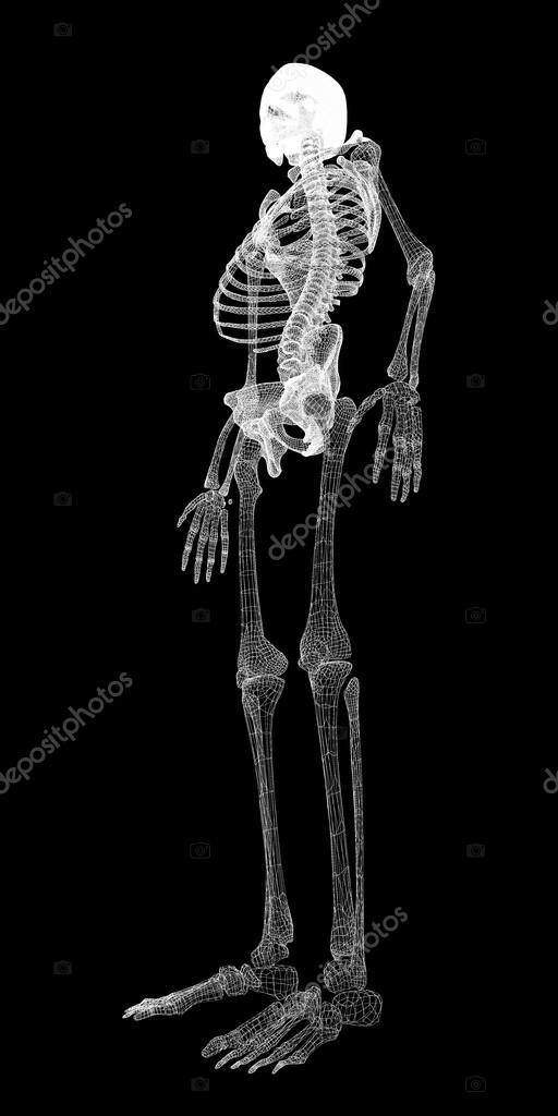 Menschlichen Körper, Skelett — Stockfoto © Podsolnukh #57757307
