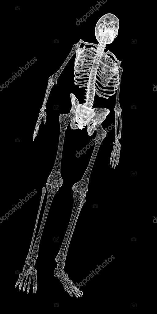 Menschlichen Körper, Skelett — Stockfoto © Podsolnukh #57757615