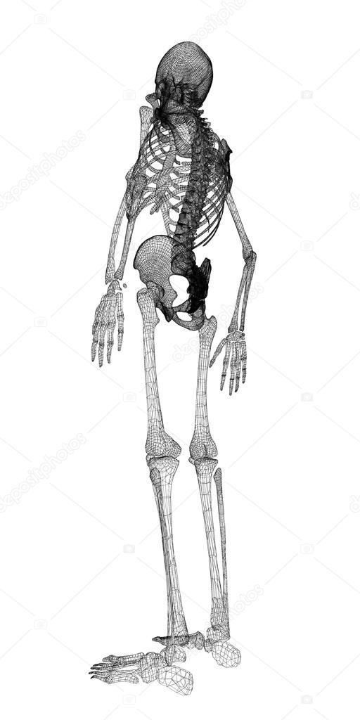 Menschlichen Körper, Skelett — Stockfoto © Podsolnukh #58453921
