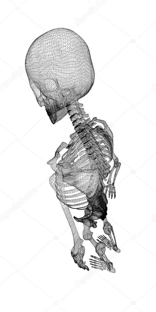 Menschlichen Körper, Skelett — Stockfoto © Podsolnukh #58454135
